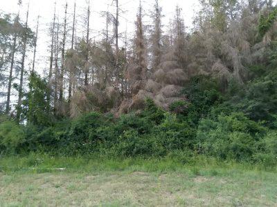 Wald am Blessberg im Sommer 2019